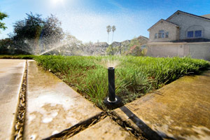 Irrigation design, Tampa, FL